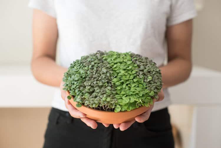 Virtual Grow-Your-Own Microgreens Class