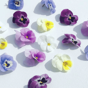 Edible Flowers + Garnishes